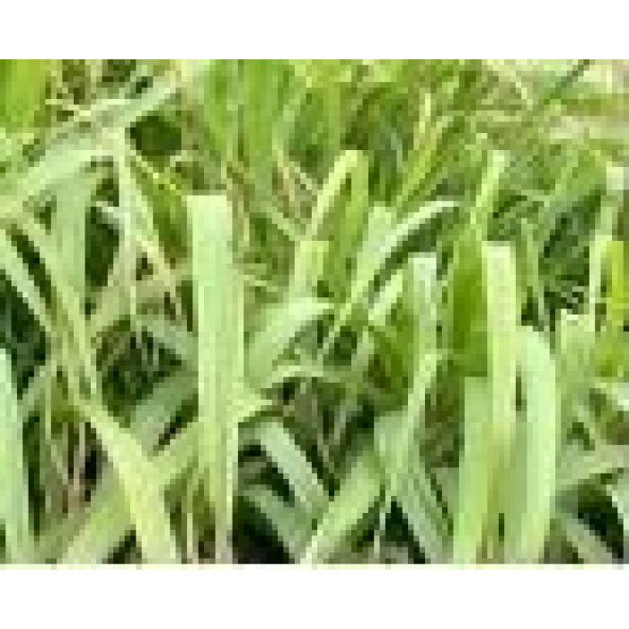 Lemongrass Essential Oil 12mL