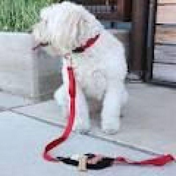 Spibelt Dog Lead